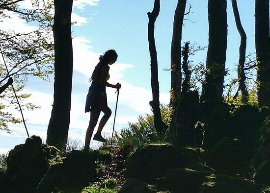 Echando raíces a cada paso